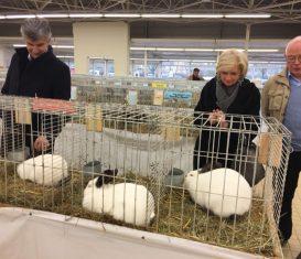 Salon avicole à Paray