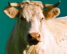 Menu végétarien : mon communiqué de presse